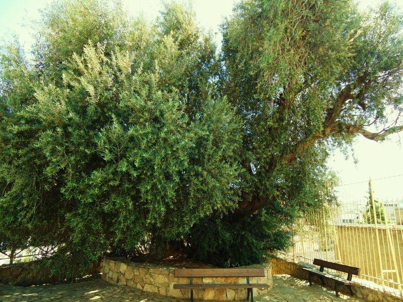 olivier de Saint Augustin